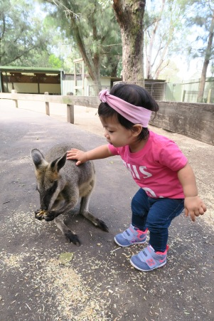 Petting the wallaby.